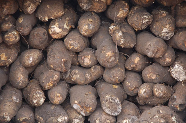 Yam export: Local consumption, price won't be adversely affected, FG assures Nigerians